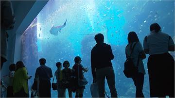 萌!企鵝就從頭上游過去 Xpark水族館開箱搶先看