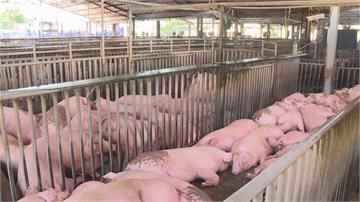 快新聞/美豬牛開放引爭議 萊克多巴胺風險評估報告出爐