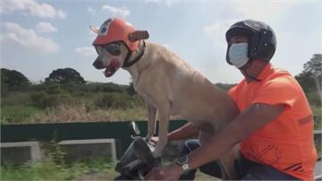 就愛坐機車! 菲律賓狗狗陪主人騎車環島 平衡感超好 還幫追搶匪