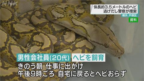 日本「3.5米巨型網紋蟒」逃家!地點緊鄰車站.小學 警籲居民多留意