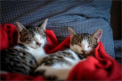 貓咪太可愛!國內侍候「貓皇」人數比例急追汪汪 5年內大增14%