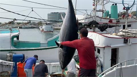 黑鮪魚價格大崩盤 2000元→149元 漁民叫苦連天