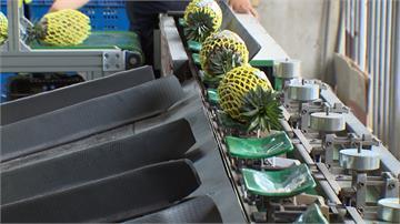 高雄市府積極開拓鳳梨通路 每周維持三十個以上貨櫃量