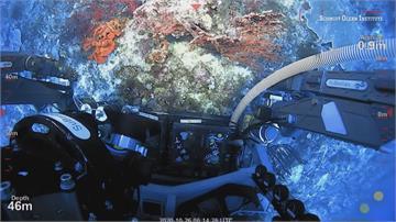 跟101一樣高!澳洲大堡礁海域發現巨大珊瑚礁