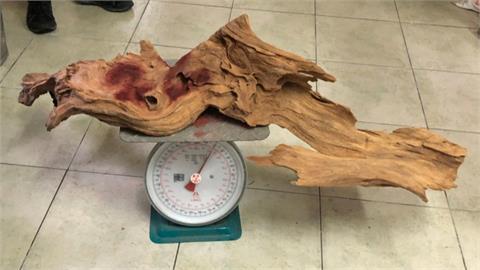 盜伐台灣肖楠木699公斤 警追查7個月逮山老鼠
