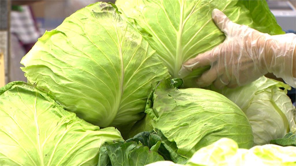 高麗菜產量過剩 創意菜色「珍奶炒高麗菜」吸睛