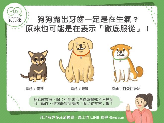 【汪汪行為】狗狗露出牙齒是生氣?不一定!也可能是「徹底服從」唷~|寵物愛很大