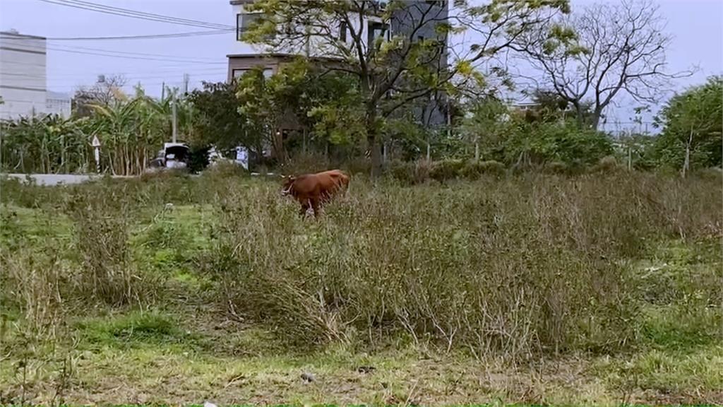 「牛牛好可愛」! 婦拍照下秒遭牛衝撞送醫