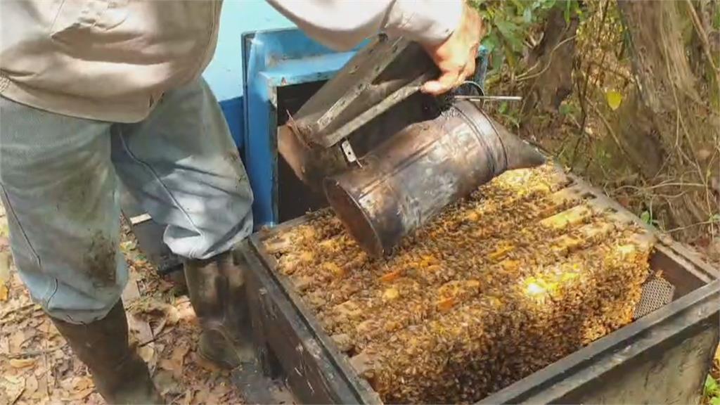 嫌犯盜12蜂箱24萬隻蜜蜂 價值逾7萬