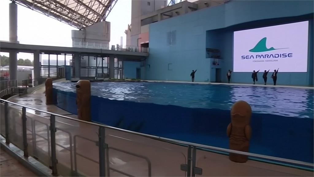 在家也能看表演!水族館推「線上看」超萌動物療癒人心