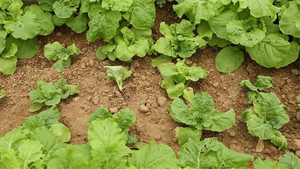 台灣70%土壤屬酸性 鹼性肥料改良土質