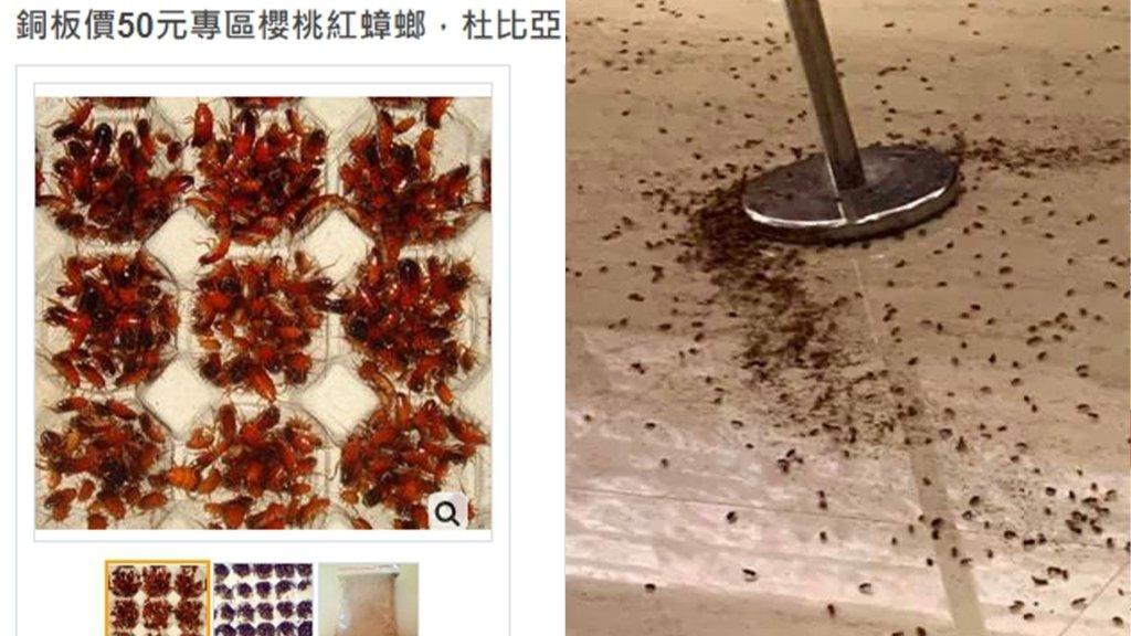 警界餐敘遭上千隻蟑螂砸場 網購成本僅需銅板價驚嚇度卻是破表