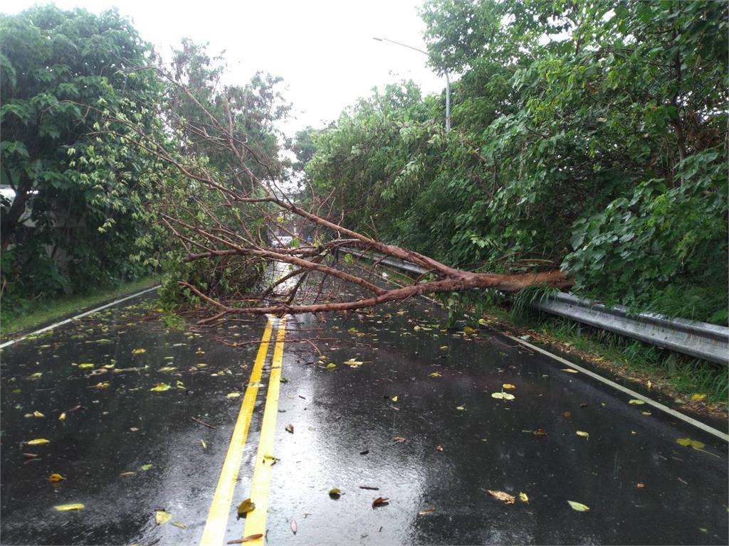 快新聞/台中午後大雨路樹倒塌 女騎士遭重壓一度無生命跡象