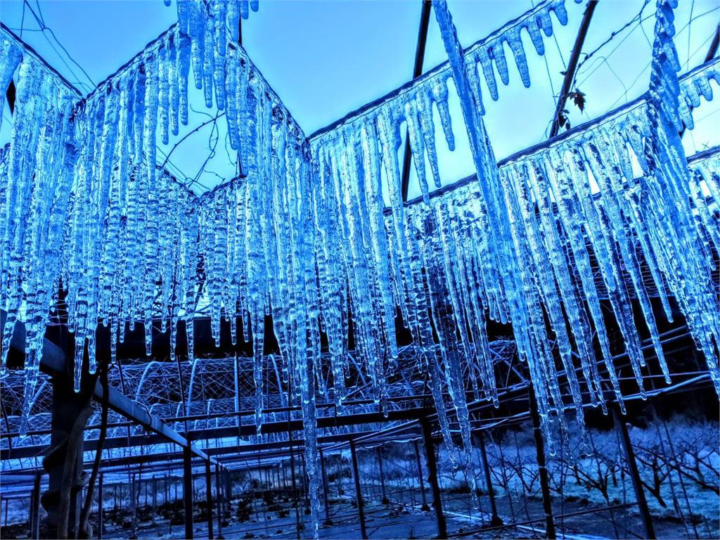 快新聞/美翻了! 武陵農場出現水晶簾冰柱 園方:這是美麗的錯誤