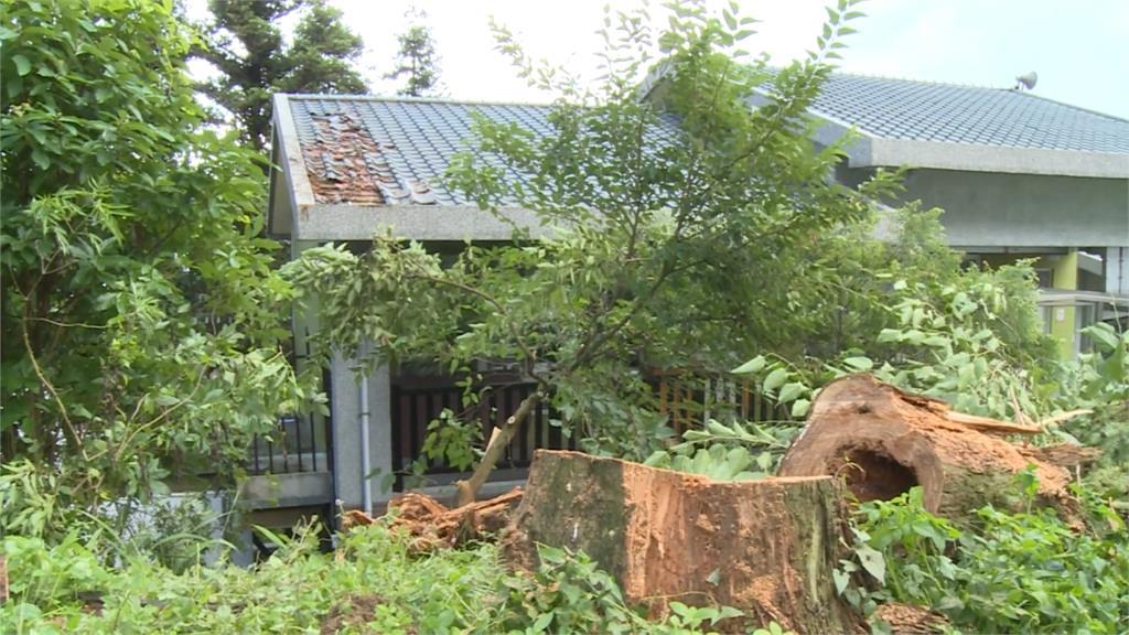 雲林午後暴雨颳強風 吹倒樟湖國小校樹壓壞屋頂