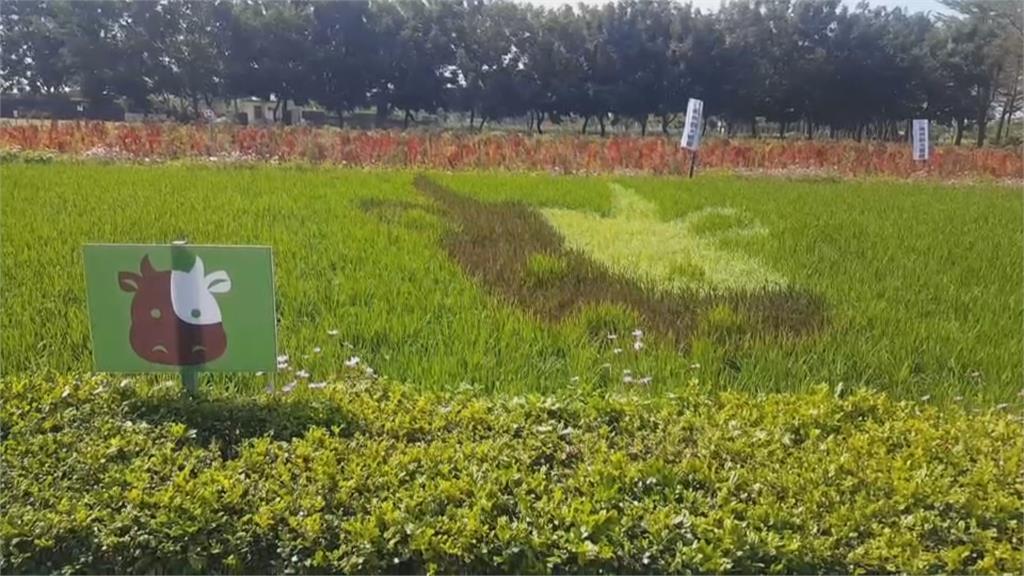 屏東南州糖廠美翻!觀賞十二生肖彩繪稻田與波斯菊花海