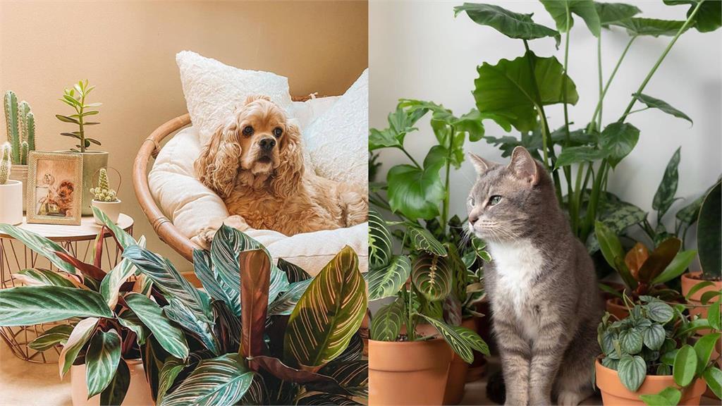 養寵物注意!這些室內植物對毛孩有毒