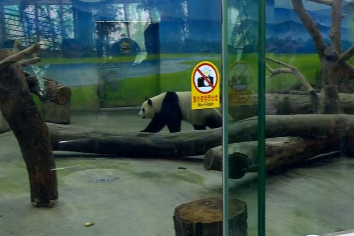 初二走春人潮多 動物園、貓纜爆滿人潮