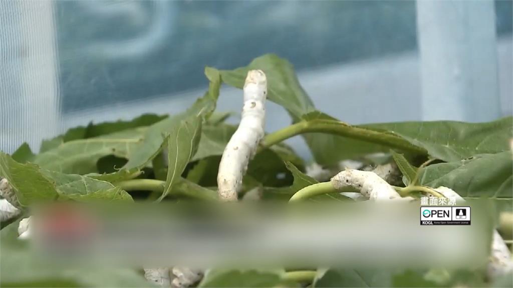 最新研究!食用「磨成粉蠶寶寶」有助治療阿茲海默症