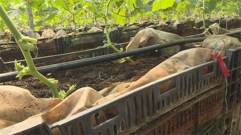 以色列滴灌技術 苗栗苑裡青農引妙招抗旱