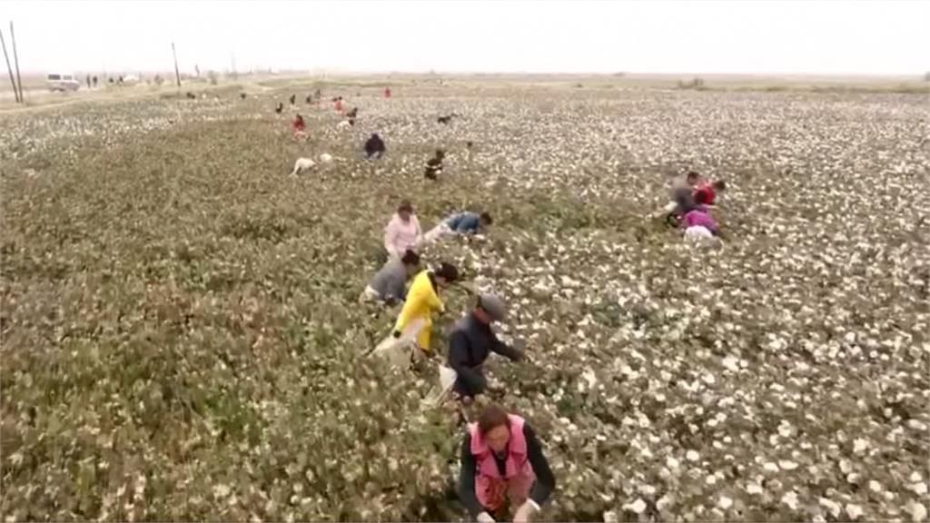 澳洲智庫:新疆生育率降幅超越近代任何種族滅絕地區