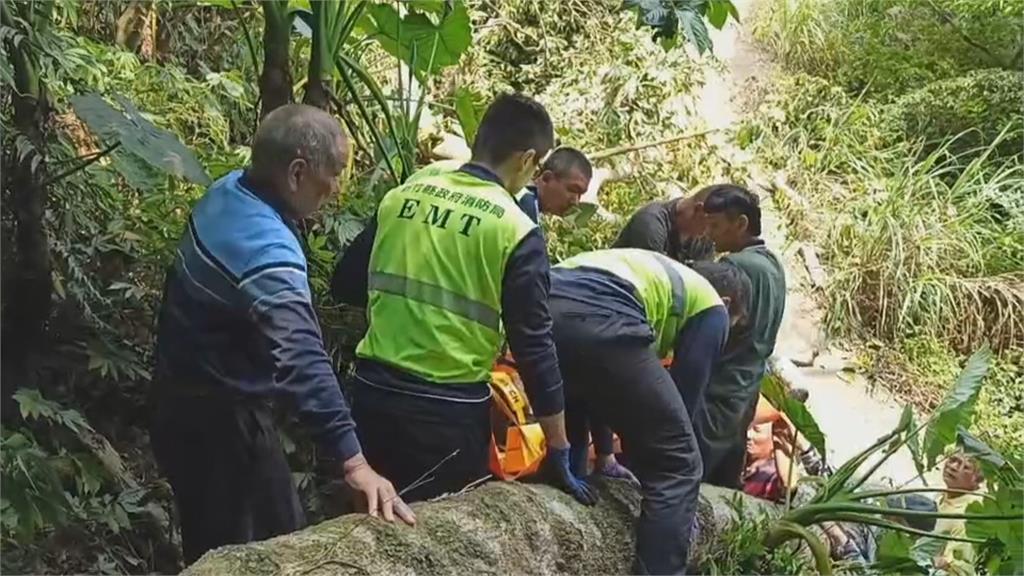 男疑攀高鋸樹不慎摔落 慘遭百公斤樹木重壓