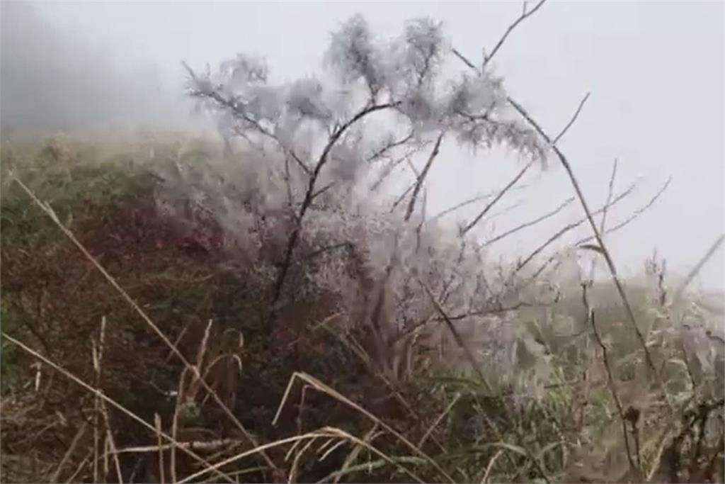 快新聞/太平山-3°C樹梢形成霧淞! 寒流發威溫度直降 今晚到元旦急凍3天