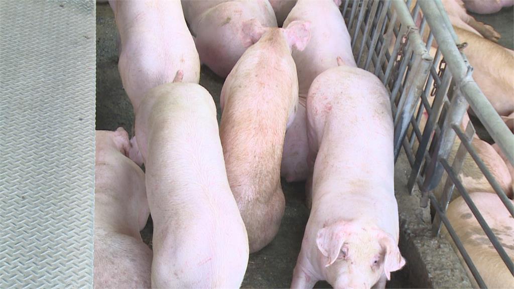 宅在家偏好自煮「台灣豬」 豬價飆升至每公斤88.67元新高