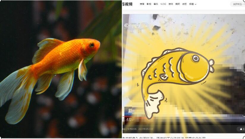 1張怪異「長嘴巴」?中國孩子網購「小魚」開箱驚現「泰國鱷」!