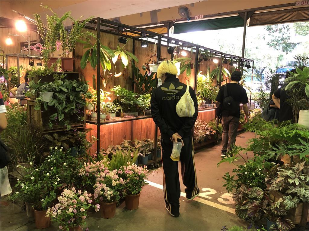 觀葉植物去哪裡買?這12家花市、園藝店一定有你能去的