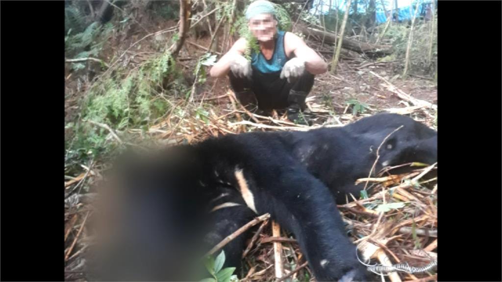 良心在哪? 山老鼠盜伐 竟殺台灣黑熊吃下肚