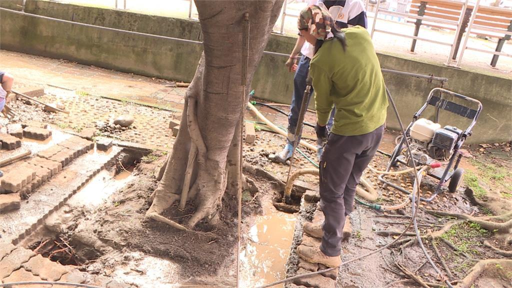 搶救老樹、改善排水!年輕社區規畫師與樹醫共同努力