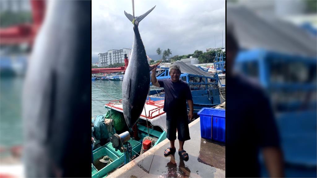 釣黑鮪魚遭海豚吃到剩魚頭 船長今雪恥抓回12隻
