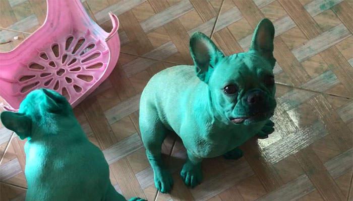 網路爆紅《綠色法鬥犬》這綠到像是異世界傳送過來的...