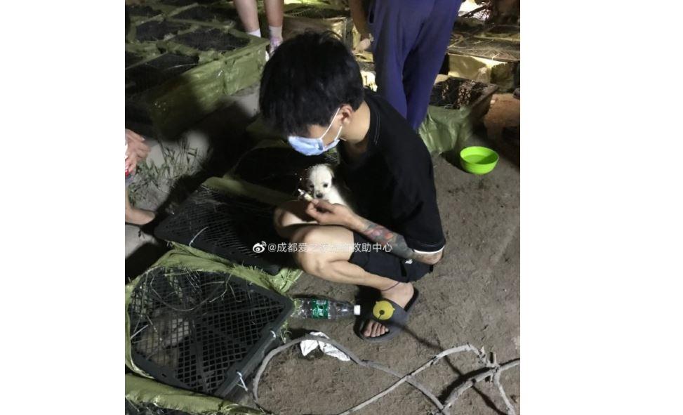 中國業者賣寵物盲盒引眾怒 央視批背離人性