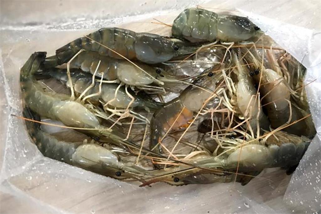 快新聞/中國「十足目虹彩病毒」侵全台逾10螯蝦場 農委會:全部清除