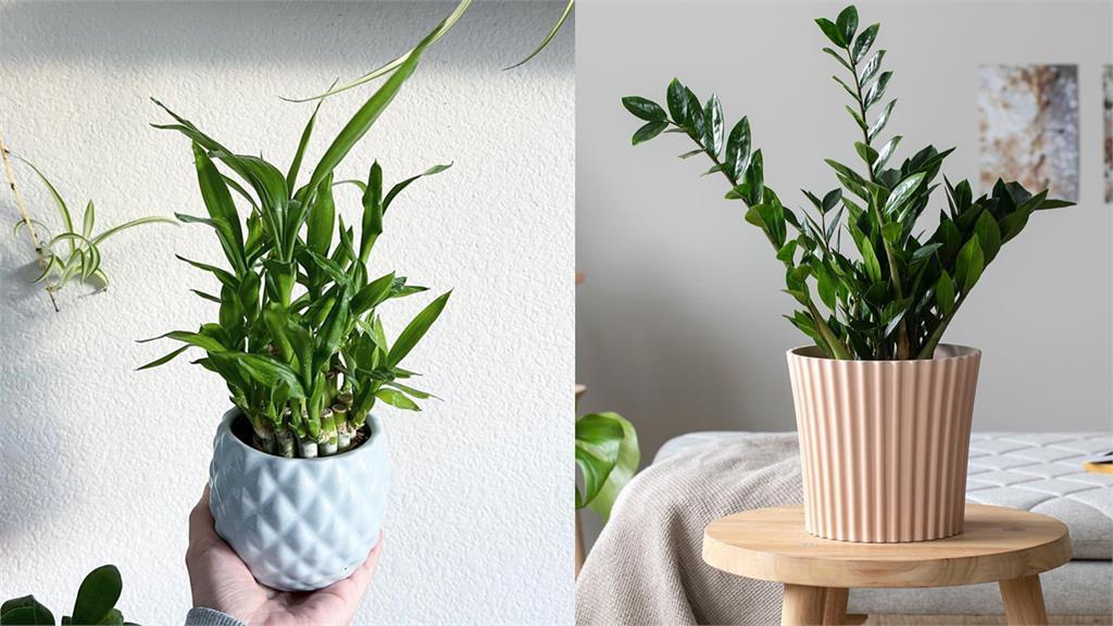 新年財運旺起來!這4種室內招財植物放財位就對了