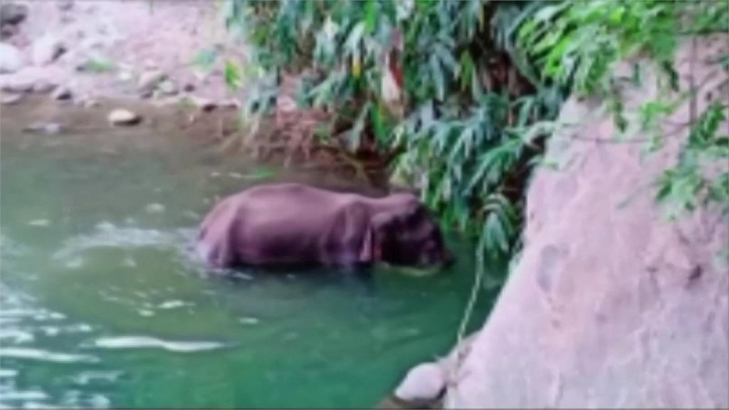 疑遭惡意餵食 印度懷孕母象吃到鞭炮鳳梨一屍兩命