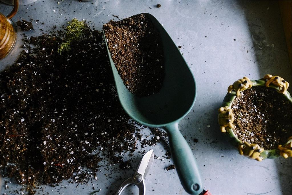 觀葉植物土壤這樣配!傳說中的「黃金比例」原來是...