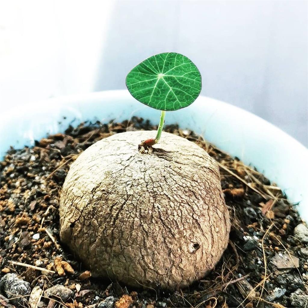 春天植物甦醒!這時候可以幫觀葉植物做3件事情