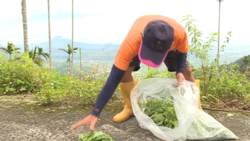 原住民採野菜、野菇除罪化!學者大讚新法實現土地正義