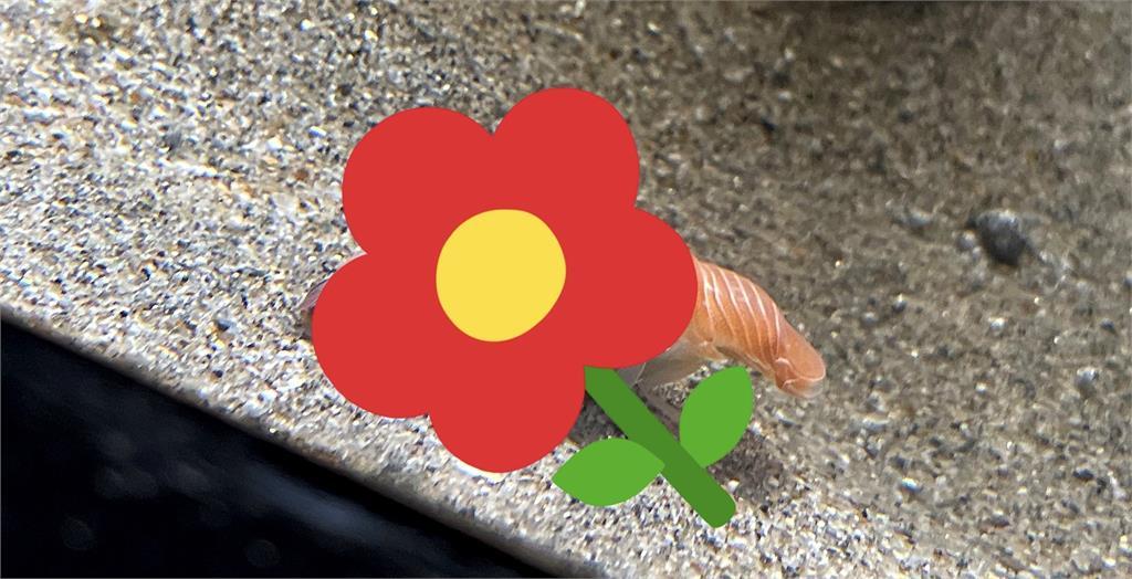 日水族館展示新寵兒!網見「游泳鮭魚壽司」超驚喜:給我來10盤