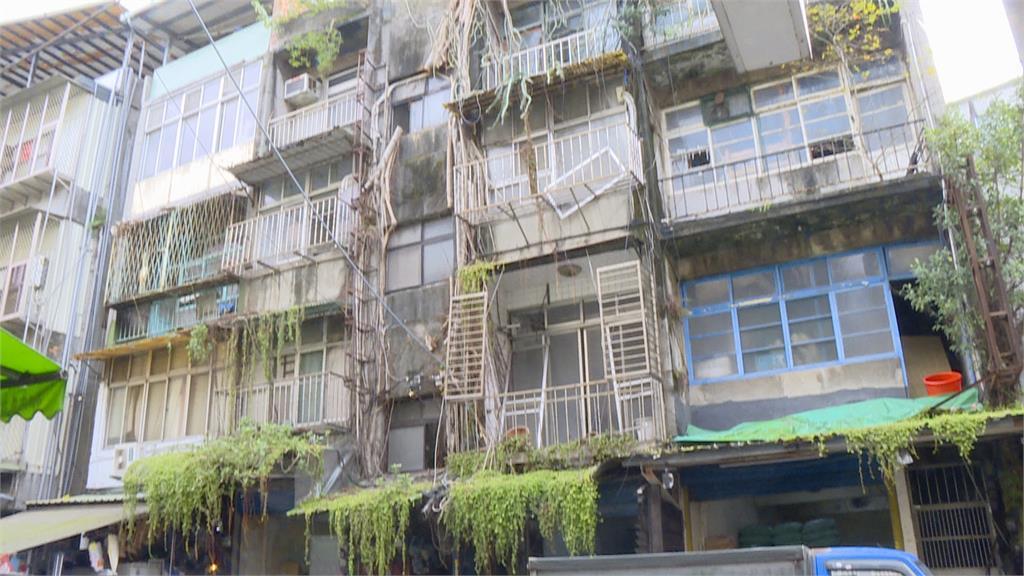 半世紀老公寓 榕樹竄生穿牆纏繞!信義區赫見叢林景象 暗藏危機拆除難