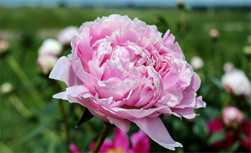 過年剛好開花!推薦10種現在該種的球根植物