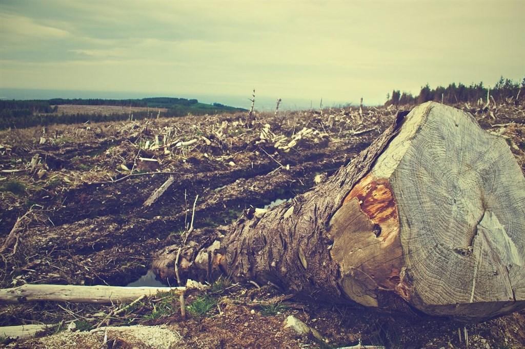 亞馬遜濫伐未因疫情減緩 去年雨林消失面積增17%