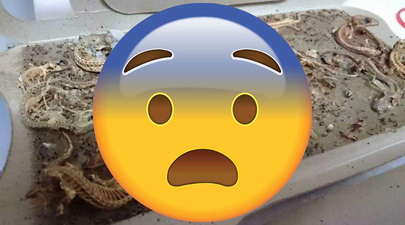 10年蟑螂屋完整保存「壁虎化石」!網驚:是侏儸紀公園