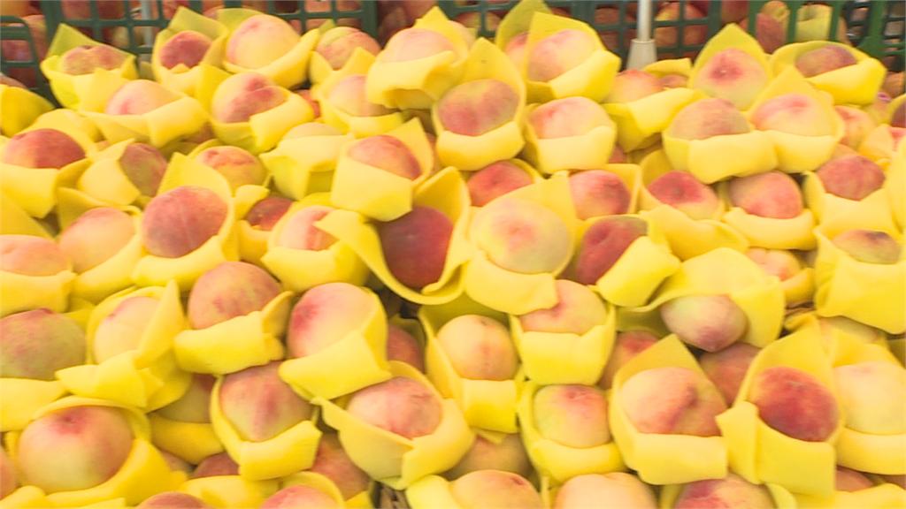 「樂桃桃」逃了 !快閃推廣梨山水蜜桃