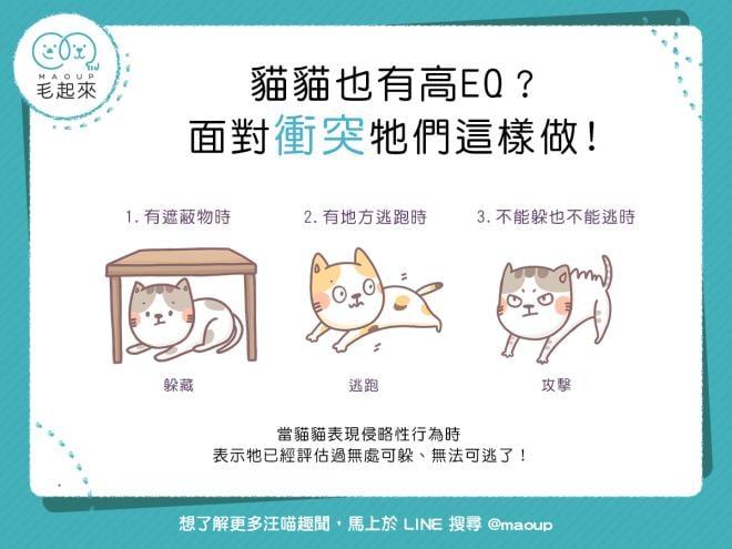【貓貓行為學】貓貓也有高EQ?面對衝突牠們這樣做!|寵物愛很大