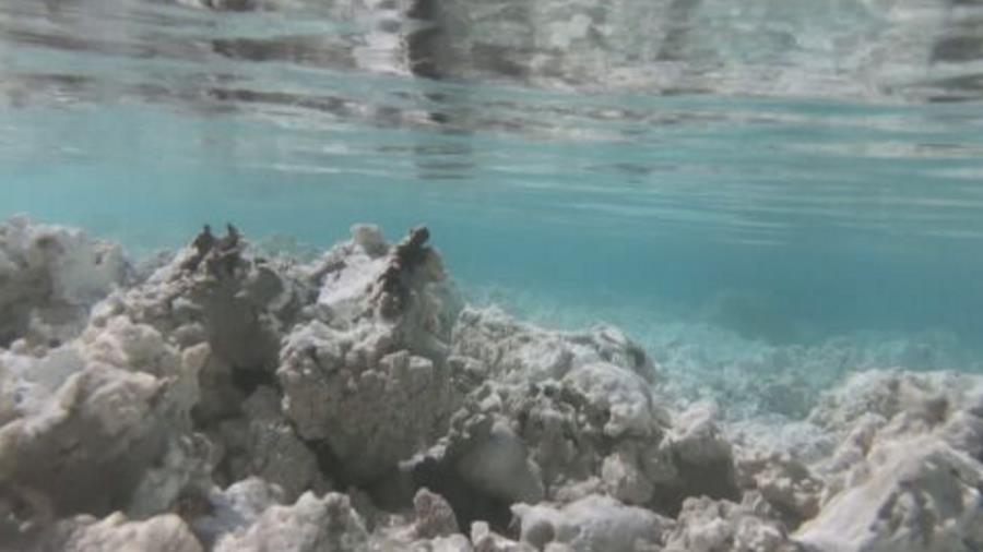 土耳其薩爾達湖似火星隕石坑 助探索火星生命起源