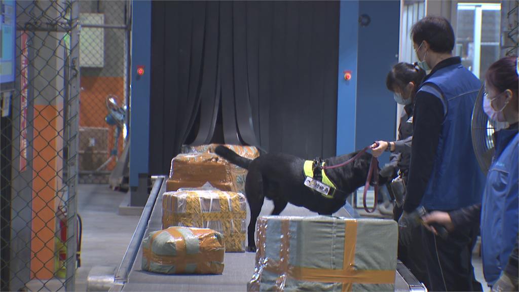 快新聞/馬來西亞爆發非洲豬瘟 今起攜豬肉入境開罰20萬